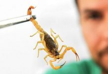 Scorpion-Combat